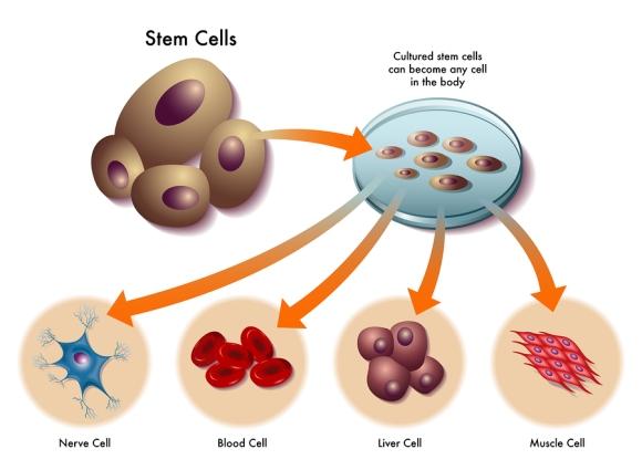 stemcells - TERAPIA DE REGENERACIÓN CELULAR A BASE DE INDUCTORES SIN EFECTOS SECUNDARIOS