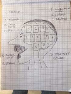drawingbrain_1